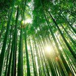 日田市の観光スポット20選。見ていると行きたくなる定番から穴場まで!