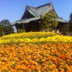 成田周辺の観光スポット10選。定番から穴場まで、こんなにたくさん!