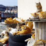 """ネコ好きにはたまらない!全国の""""ネコだらけ""""の島5選!"""