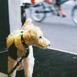 関西のお出かけスポットでペットも一緒に行ける場所6選。犬連れで楽しもう!