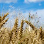 究極の地産地消!北海道で地元小麦を使ったスイーツを堪能しよう!!