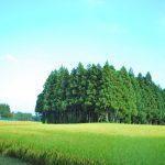 那須塩原の『とて焼』は、軽食やおやつに最高♪12種類大公開!