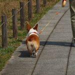 景色を楽しみながらのんびり歩く!東京のお台場にある「磯のプロムナード」とは
