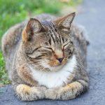 猫好きは行ってみて!山口の隠れた名所 ネコ寺♪雲林寺を紹介します!!