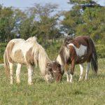 黒部の景色をバックに動物たちとたわむれよう♪くろべ牧場まきばの風